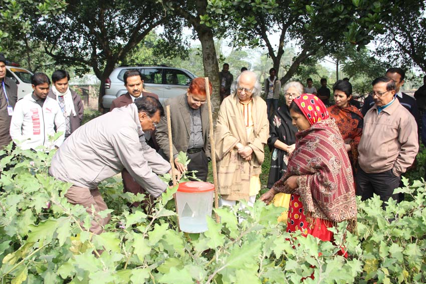 Chairman PKSF is observing the use of a sex pheromone trap in cultivation of chemical free vegetables