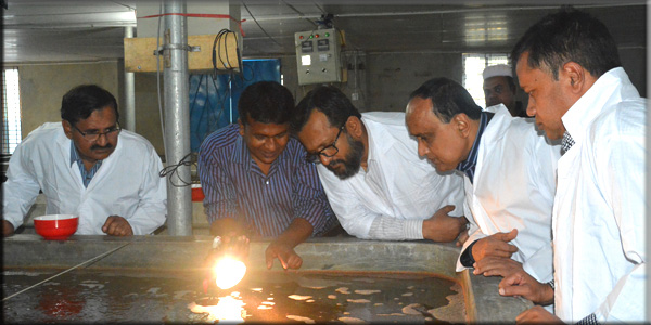 Crablet Observation by PKSF high officials in Crab Hatchery