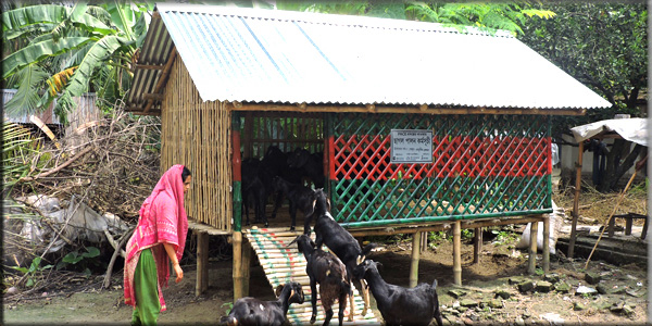 Goat Rearing in Bamboo slated house
