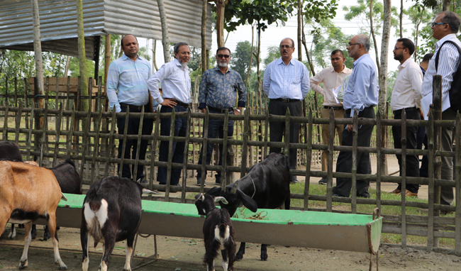 Visit-Black-bengal-goat-breeding-farm-of-SHARP-at-Nilphamary